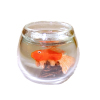 Orange Goldfish in Glass Fish Bowl