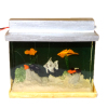 Illuminated Fish Tank Filled with Tropical Fish
