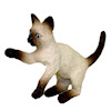 Playful Siamese Cat