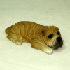 Chinese Shar Pei Dog Lying Down
