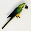 Colorful Macaw Parrot Bird Pet
