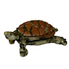 Pet Brown Turtle