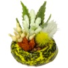 Handcrafted Plant Dish Garden in Ceramic Pot