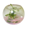 Glass Fish Bowl Terrarium with Pet Turtle