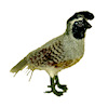 Alice Zinn Handcrafted Quail Bird