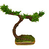 Handcrafted Dollhouse Asian Bonsai Tree Plant