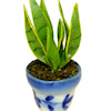 Handcrafted Aloe Vera Plant in Ceramic Pot