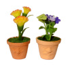 Flowers in Sweet and Sour Flower Pots