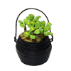 Irish St Patrick's Day Four Leaf Clover Plant in Pot