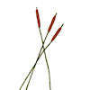 Three Handcrafted Cattails