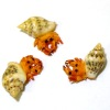 Three Dollhouse Hermit Crabs