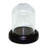 Glass Dome on Wood Base