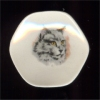 White Persian Cat Collector Plate