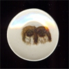 Pekingese Dog Collector Plate
