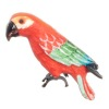 Short Tail Macaw Parrot Bird
