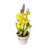 Hanging Oncidium Orchid In Pot