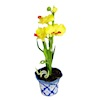 Large Yellow and Red Orchid Flower in Blue Ceramic Pot