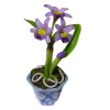 Purple Orchids In Pot