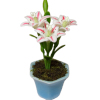 Pink and White Flowers in Planter