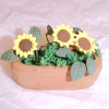Bright Yellow Sunflowers in Real Terra Cotta Planter