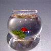 Handcrafted Glass Goldfish Bowl by Phil Grenyer