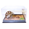 Handcrafted Ferrets in Terrarium Tank Set