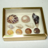 Mary Eccher Framed Seashell Collection
