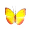 Jeannetta Kendall Handcrafted Yellow Flame Butterfly