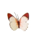 Jeannetta Kendall Handcrafted Red Tip White Butterfly