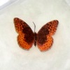 Jeannetta Kendall Handcrafted Red Edged Butterfly