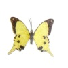 Jeannetta Kendall Handcrafted Yellow Swallowtail Butterfly