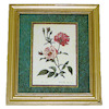Pink Roses Framed Botanical Picture