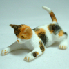 Playful Calico Pet Cat