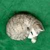 Sleeping Gray Tiger Stripe Cat