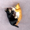 Kittens Playing - Orange Tiger Kitten and Sock Cat