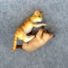 Kittens Playing - Siamese and Orange Tabby