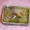 Small Filled Pond with Goldfish