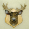 Hand Crafted Mounted Deer Head Trophy with Antlers