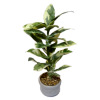 Wilhelmina Handcrafted Bird Catcher Tree Floor Plant