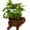 Wilhelmina Handcrafted House Plant in Elephant Planter