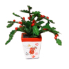 Wilhelmina Handcrafted Christmas Holly Plant Handpainted Planter