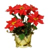 Wilhelmina Christmas Poinsettia in Golden Drum